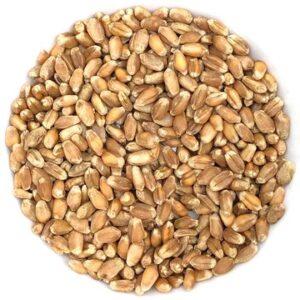 Semences pour Herbe de blé biologique