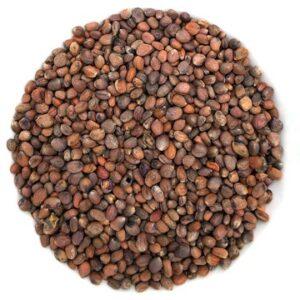 semences de radis biologique pour germinationsemences